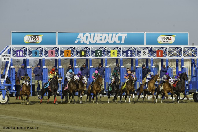 drf | Horse Racing Pure and Simple